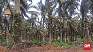 Pertamina Kembangkan BBM Ramah Lingkungan Berbasis Sawit