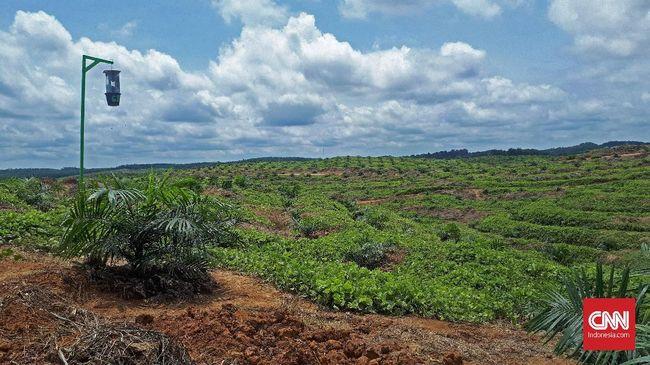 Jokowi Incar Perusahaan Sawit Nakal di Kawasan Hutan 'Liar'