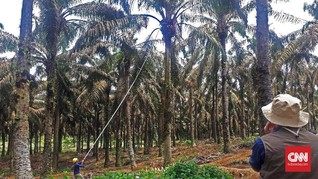 Petani Minta Pemerintah Beri Dana untuk Konversi Lahan Sawit