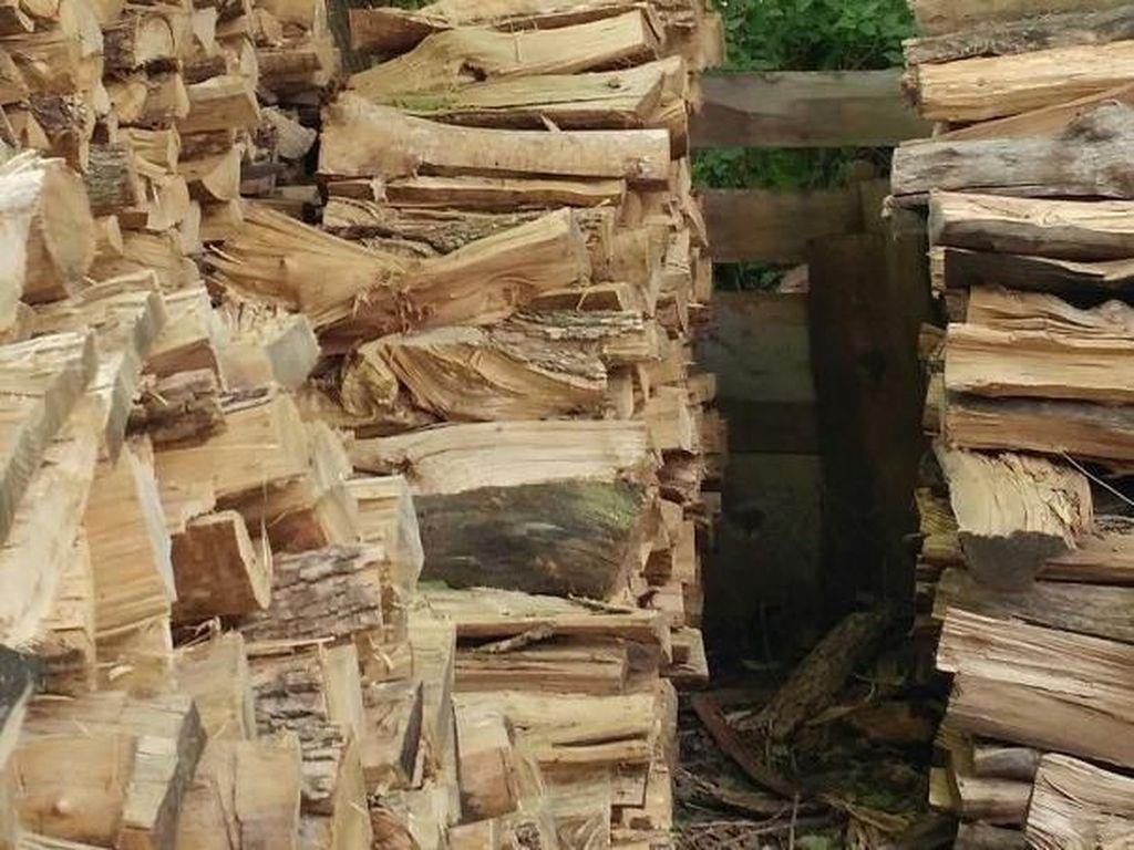 Tampaknya cuma kayu, padahal ada kucing lho di sini. Foto: Imgur