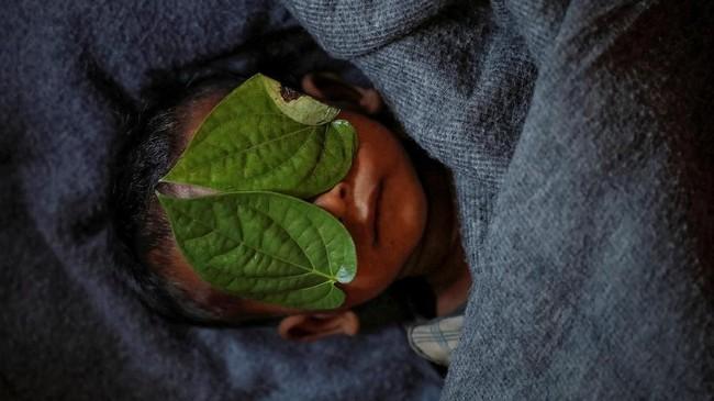 Daun sirih menutupi wajah mayat Abdul Aziz, bocah 11 tahun pengungsi Rohingya yang meninggal setelah menderita demam akut di pengungsian Balukhi, dekat Cox's Bazar, Bangladesh, 4 Desember 2017.(REUTERS/Damir Sagolj)