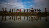 Para pengungsi Rohingya berjalan kaki melewati pematang sawah di Cox's Bazar, Bangladesh, 2 November 2017, dalam upaya menyelamatkan diri dari upaya genosida dari pemerintah Myanmar. (REUTERS/Hannah McKay)