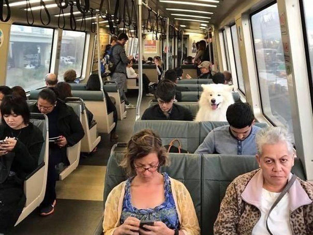 Tampak penumpang yang bukan manusia. Foto: Imgur