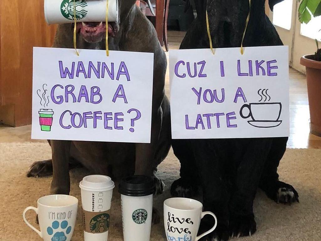 Diajak minum kopi? Pasti kamu mau kalau digombalin, Cuz I Like You A Latte. Kata latte ini plesetan jadi  a lot ya! Foto: Instagram barnabas.and.madeline.the.neos