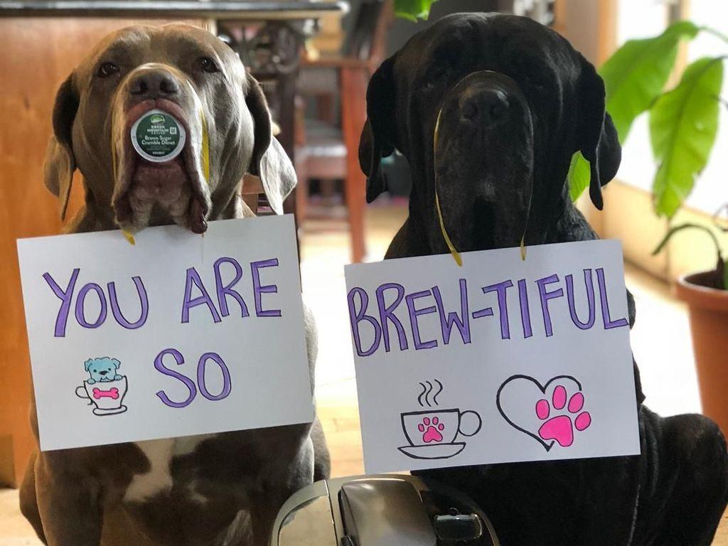 Aishh! Beautiful diplesetkan jadi Brew-tiful untuk menyeduh kopi nih. Alayna kreatif banget ya dalam mengembangkan konsep pemotretan anjing ini. Foto: Instagram barnabas.and.madeline.the.neos