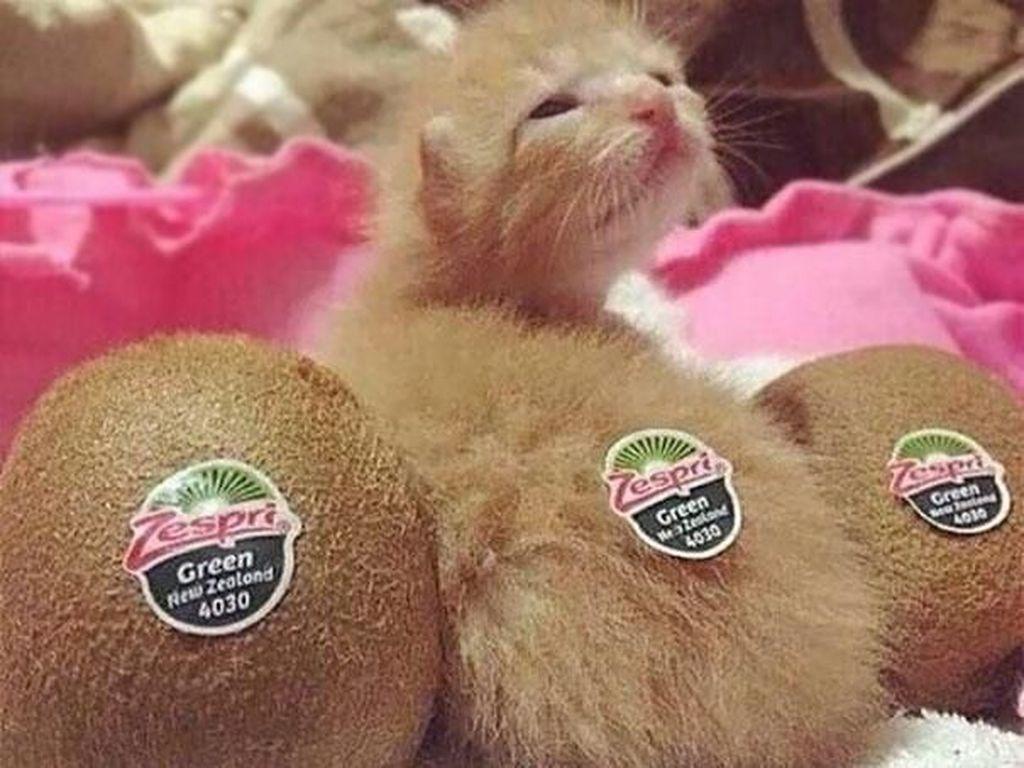 Kucing yang mirip dengan buah-buahan. Foto: Imgur