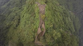Forest Stewardship Ultimatum Sinar Mas Karena Tebang Hutan