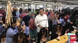 Kampanye Jokowi di Banyuwangi: Jatuh Bangun Itu Biasa