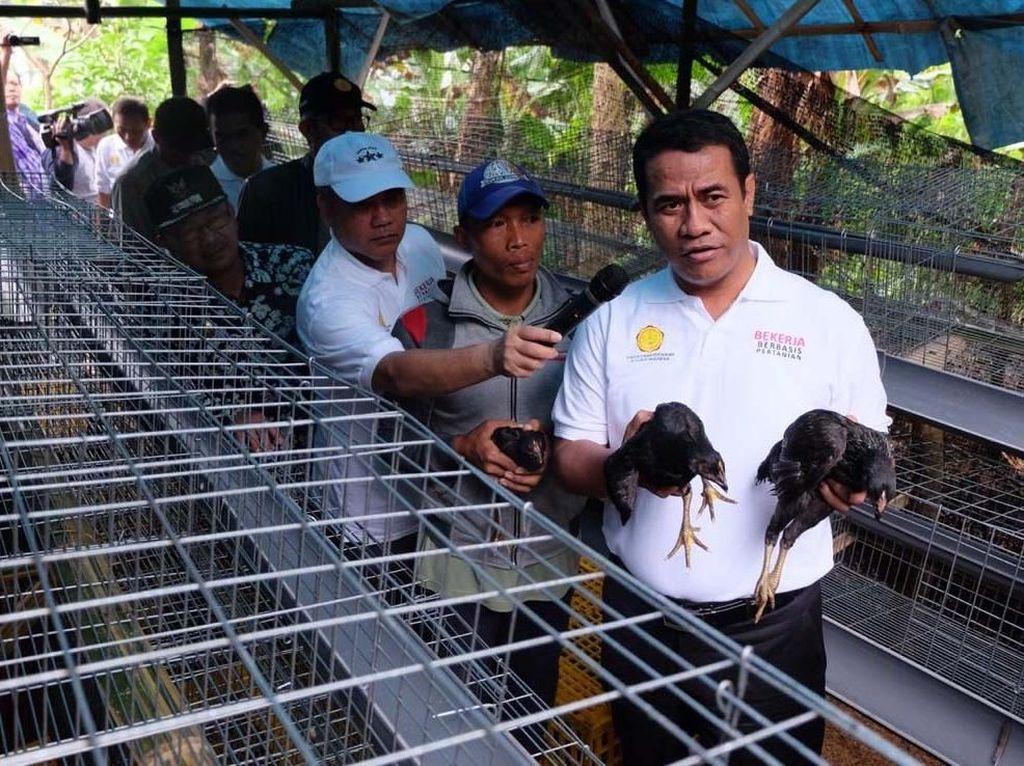 Aksi Mentan Bagi-bagi 50 Ekor Ayam ke 40 KK di Cianjur