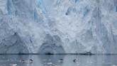 Kawanan penguin di Neko Harbour, Antartika. Penguin yang berbadan paling besar ialah Emperor Penguin (Aptenodytes forsteri), dengan ukuran maksimal 1,1 meter dan berat badan 35 kilogram.(REUTERS/Alexandre Meneghini)