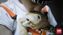 FOTO: Tekan Populasi, 90 Ekor Kucing Disterilisasi