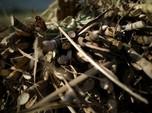 Impor Gula Tinggi, Betulkah Produksi Gula Domestik Kurang?