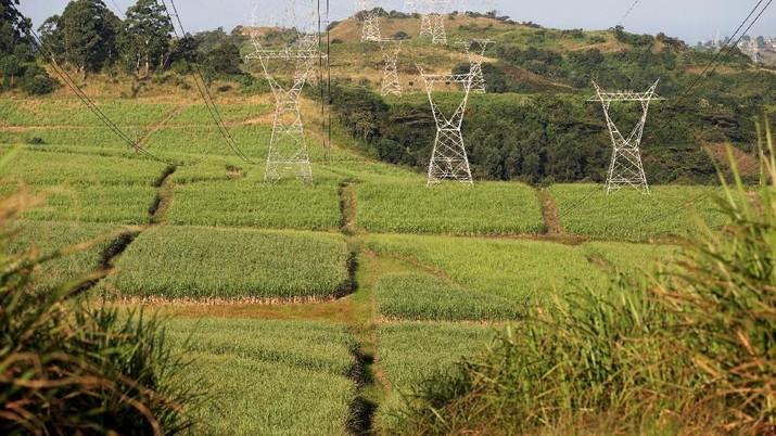 Lahan baku sawah menyusut 9% dalam 5 tahun terakhir.