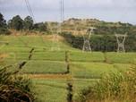 RI Darurat Sawah, Pemerintah Guyur Insentif ke Petani