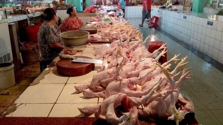 Harga ayam tinggi di bulan puasa karena stok dinilai kurang.