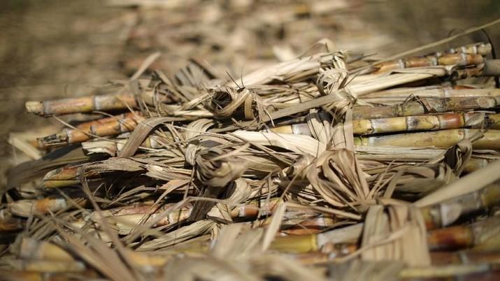 Media Asing Sebut Malaysia Siap Ekspor Gula ke Indonesia
