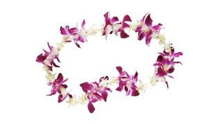 Hari Buruh dan Hari Lei di Hawaii