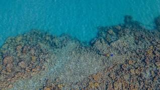 Hawaii Larang Tabir Surya yang Merusak Terumbu Karang