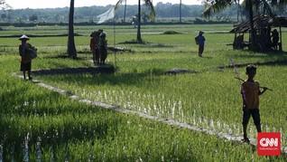 BPS Sebut Luas Lahan Pertanian Kian Menurun