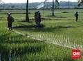 Perbaiki Metode Produksi Beras, Kementan Tak Dilibatkan
