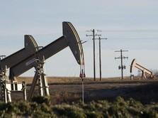 Euforia Keputusan OPEC Tak Bertahan Lama, Harga Minyak Turun