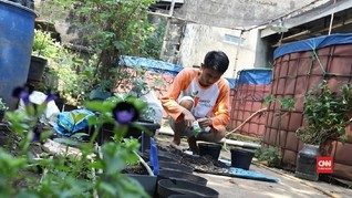 Kebun Mandiri Karya 'Tangan Dingin' Kurnia