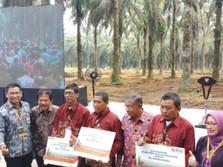 BNI Perluas Penyaluran KUR Replanting Kelapa Sawit ke Riau