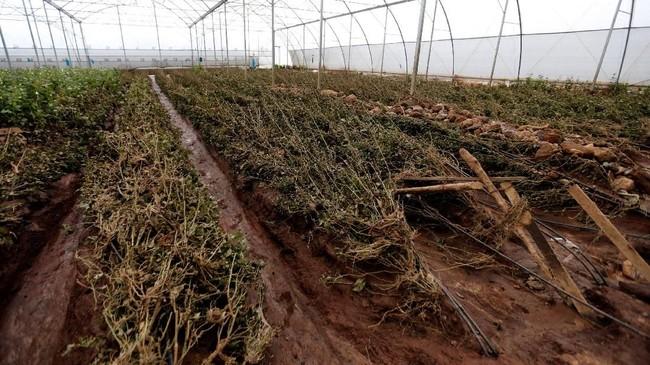 Setelah kemarau parah tahun lalu, Afrika Timur dua bulan terakhir terus diguyur hujan lebat. (REUTERS/Thomas Mukoya)