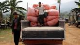 Salah satu faktor pendorong yang membuat penduduk beralih jadi peternak ulat sutra adalah harga opium yang terjun bebas di pasaran dunia, tergantikan narkotika sintetis. (REUTERS/Ann Wang)