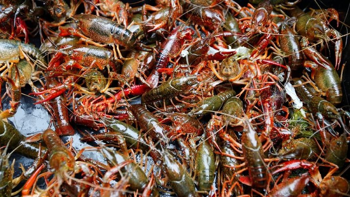 North American crayfish (Procambarus clarkii) fished from Berlin's city centre Tiergarten Park are on display at a market stall of covered market 'Markthalle Neun' in Berlin, Germany, May 11, 2018. REUTERS/Fabrizio Bensch