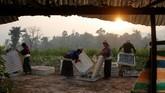 Kelompok etnis Palaung membersihkan wadah untuk ulat sutra di peternakan Wanpaolong, Myanmar. Negara di Asia Tenggara itu semula dikenal sebagai produsen opium terbesar kedua di dunia setelah Afghanistan. (REUTERS/Ann Wang)