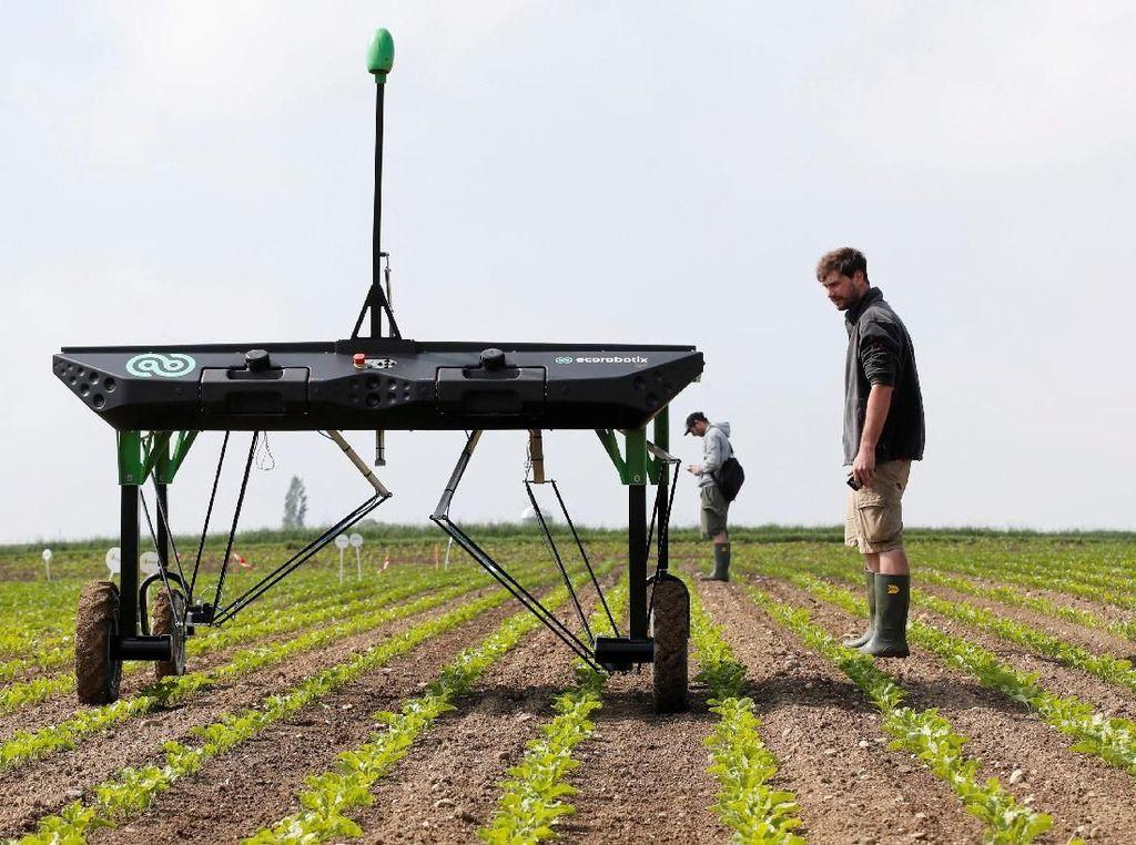 Keren! Robot Ini Diciptakan untuk Bantu Para Petani