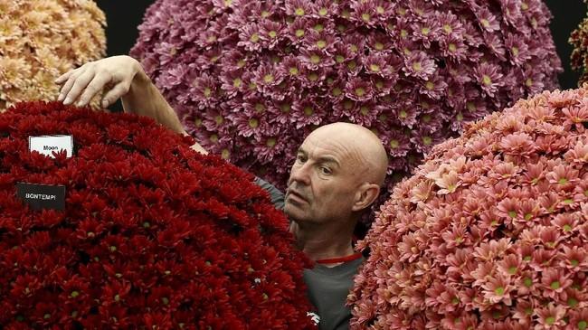 Pameran bunga ini diselenggarakan setiap tahunnya di penghujung musim semi menjelang musim panas, masa di mana bunga-bunga bermekaran dengan cantiknya. (REUTERS/Simon Dawson)