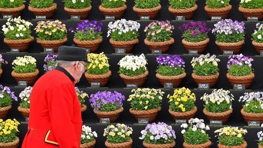 Melihat Warna Warni Bunga Dalam Chelsea Flower Show