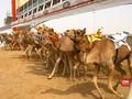 VIDEO: Balap Unta Dubai Berhadiah Rp400 Miliar