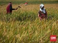 Netizen Cuitkan Nasib Petani di Tengah Isu Impor Beras