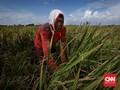 Kementan Sebut Investasi Pertanian Bisa Tembus Rp61 Triliun