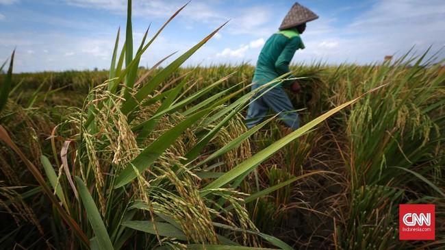 Petani memanen padi di areal persawahan Rorotan, Jakarta Utara, Kamis (24/5). Dalam dua tahun terakhir, pemerintah telah menjalankan program untuk memperbanyak cetak sawah baru. (CNNIndonesia/Safir Makki)