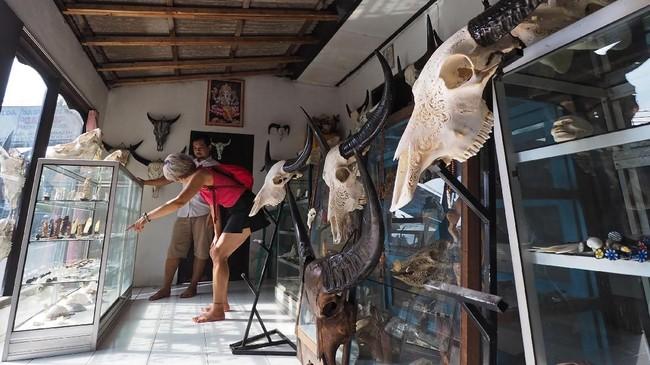 Ukiran kepala kerbau ternyata memiliki daya tarik tersendiri. Sejumlah turis bahkan rela berburu karya seni ini hingga ke Bali. (Anadolu Agency/Mahendra Moonstar)
