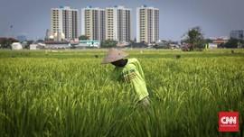 FOTO: Mengintip Lahan Pertanian di Tengah Ibu Kota