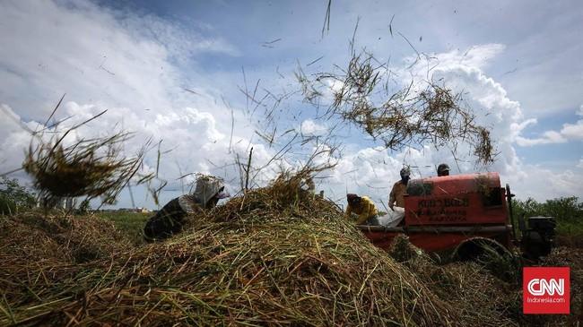 Aktivitaspetani saat menggiling padi di areal persawahan kawasan Rorotan, Jakarta Utara, Kamis (24/5). (CNNIndonesia/Safir Makki)