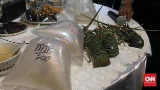 PPATK: Aliran Dana Penyelundupan Benih Lobster Rp900 Miliar