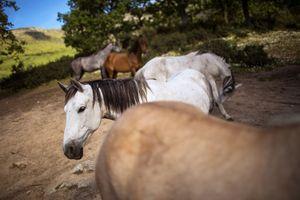 Meredakan Stres dan Kecemaasan Dengan Berkuda