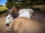 Meredakan Stres dan Kecemasan dengan Berkuda