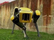 Di 2019, Bisa Jadi Kamu Akan Pelihara Robot Anjing