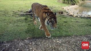 Pria di Langkat Tewas Diduga Diterkam Harimau