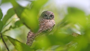 Status 3 Jenis Burung di Indonesia Kian Terancam Punah