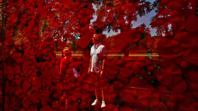 Bayangan seorang pria tercermin dalam monumen sementara yang terbuat dari 600 ribu bunga Poppy di National Mall di Washington DC, Amerika Serikat. (REUTERS/Carlos Barria)