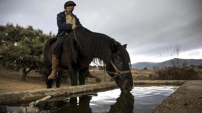 Noailles akan memonitor reaksi kuda-kudanya terhadap para pasien. Dari sanalah para pasien akan belajar untuk mengenali dan mengendalikan emosi. (REUTERS/Juan Medina)