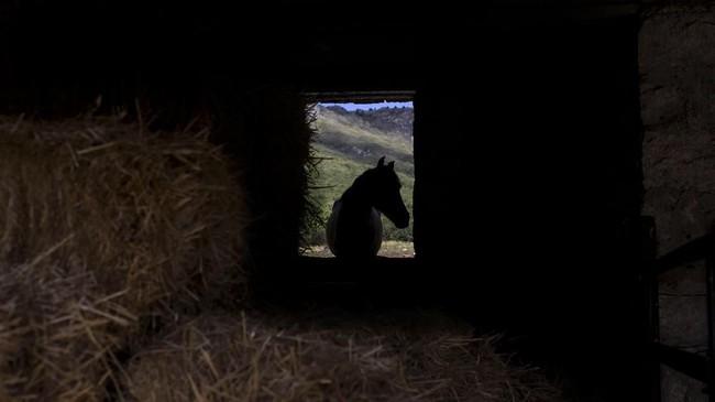 Satu sesi terapi kuda di Madrid, Spanyol, ini dibanderol dengan harga 120 euro, atau sekitar Rp1,9 juta. (REUTERS/Juan Medina)